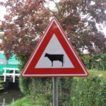 Beware of cows in wooden shoes crossing.